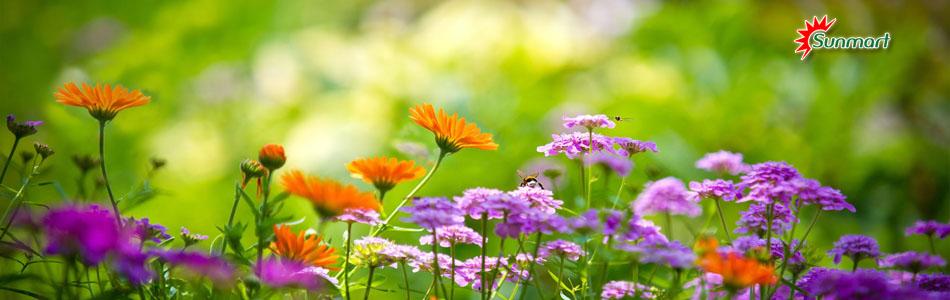 Sunmart  - Hạt giống hoa, hạt giống rau chất lượng cao