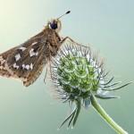 Ảnh hoa, bướm đẹp lung linh của Simone Noll