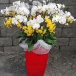 Cách chọn hoa lan Hồ Điệp cho dịp Tết