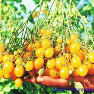 ca-chua-tomato-lidi2