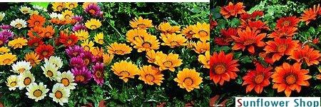 cua hang hat giong hoa 9 - Giới thiệu