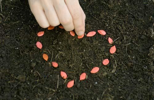 Cách bảo quản hạt giống