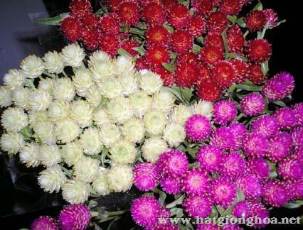 hoa cuc nut ao6 - Hoa Cúc Pha lê