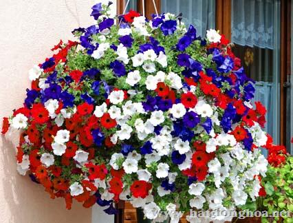 hoa da yen thao pentunia5 - Hoa Dạ yến thảo