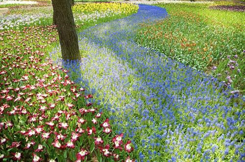 thien duong hoa nhat ban 1 -  Lạc vào thiên đường hoa ở xứ sở mặt trời mọc