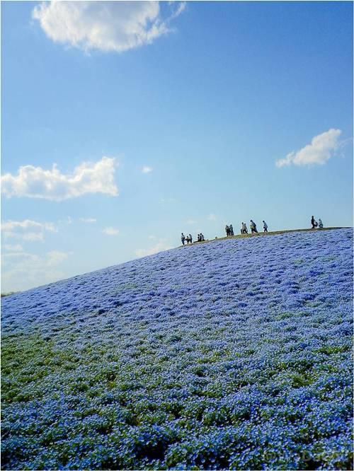 thien duong hoa nhat ban 2 -  Lạc vào thiên đường hoa ở xứ sở mặt trời mọc