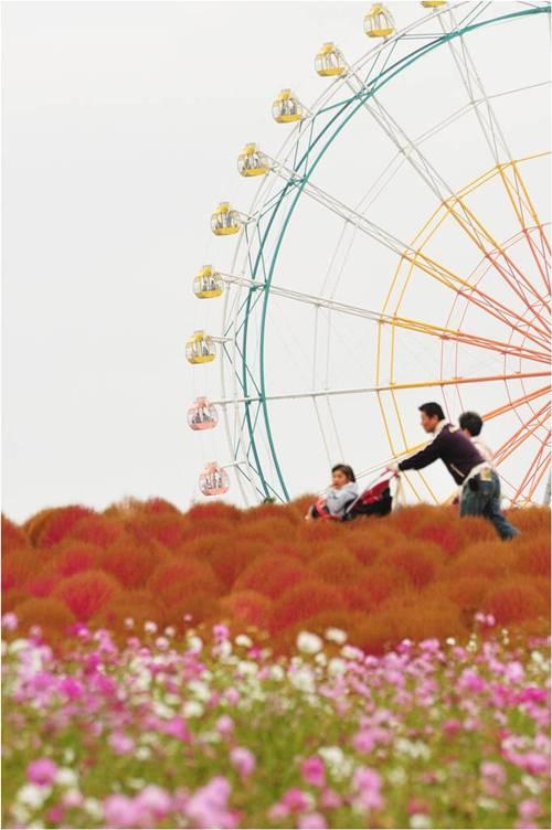 thien duong hoa nhat ban 4 -  Lạc vào thiên đường hoa ở xứ sở mặt trời mọc