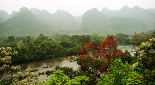 Gợi ý điểm chụp ảnh hoa gạo gần Hà Nội