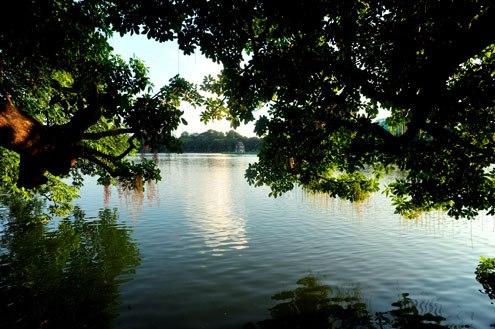 Hoa lộc vừng trong nắng chiều hồ Gươm