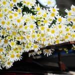Ý nghĩa các loài hoa theo phong thủy