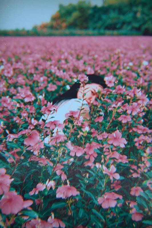 An Giang gây sốt với cánh đồng hoa dừa cạn đẹp ngút ngàn