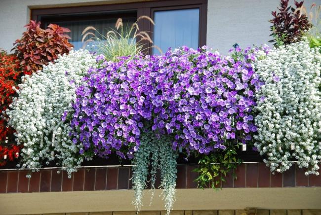 ban cong dep lung linh khi biet chon nhung loai hoa nay de trong ban - Những sắc màu nghệ thuật trong decor vườn nhà