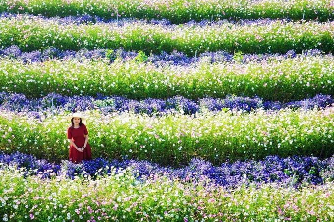 canh dong hoa nhu troi au o da lat 2 - Cánh đồng hoa như trời Âu ở Đà Lạt