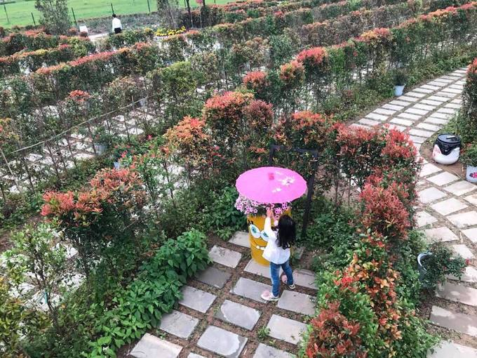 Mê cung bằng cây rộng hàng nghìn m2 ở ngoại thành Hà Nội