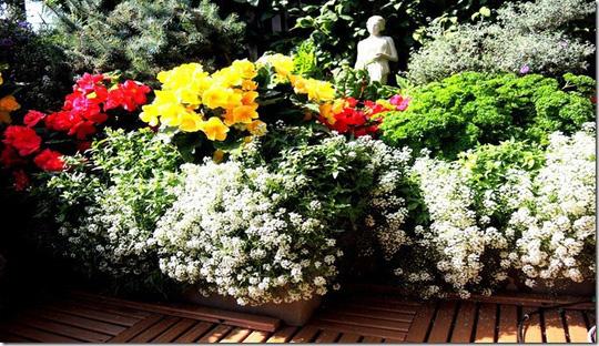 me man nhung ban cong day hoa tuyet dep 1 - Mê mẩn những ban công đầy hoa tuyệt đẹp