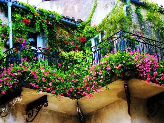 me man nhung ban cong day hoa tuyet dep 3 - Mê mẩn những ban công đầy hoa tuyệt đẹp