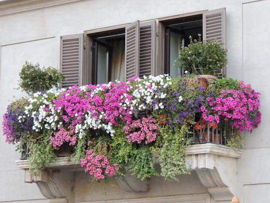 me man nhung ban cong day hoa tuyet dep 9 - Mê mẩn những ban công đầy hoa tuyệt đẹp