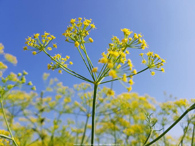 nhung canh dong hoa gay sot thoi gian qua 1 - Những cánh đồng hoa 'gây sốt' thời gian qua