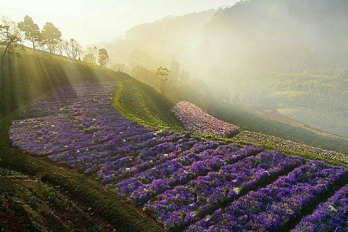 nhung canh dong hoa gay sot thoi gian qua 5 - Những cánh đồng hoa 'gây sốt' thời gian qua