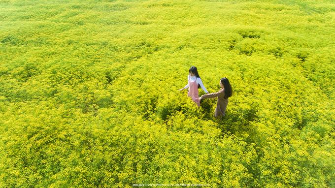 nhung canh dong hoa gay sot thoi gian qua - Những cánh đồng hoa 'gây sốt' thời gian qua