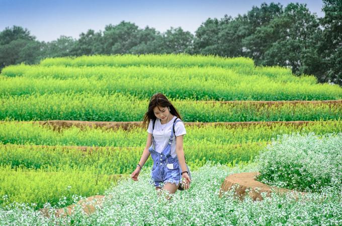 ruong hoa bac thang gay sot o ha noi 5 - Ruộng hoa bậc thang 'gây sốt' ở Hà Nội