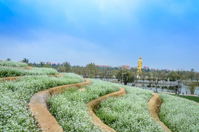 ruong hoa bac thang gay sot o ha noi 6 - Ruộng hoa bậc thang 'gây sốt' ở Hà Nội