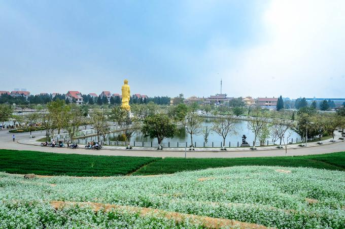 ruong hoa bac thang gay sot o ha noi 7 - Ruộng hoa bậc thang 'gây sốt' ở Hà Nội