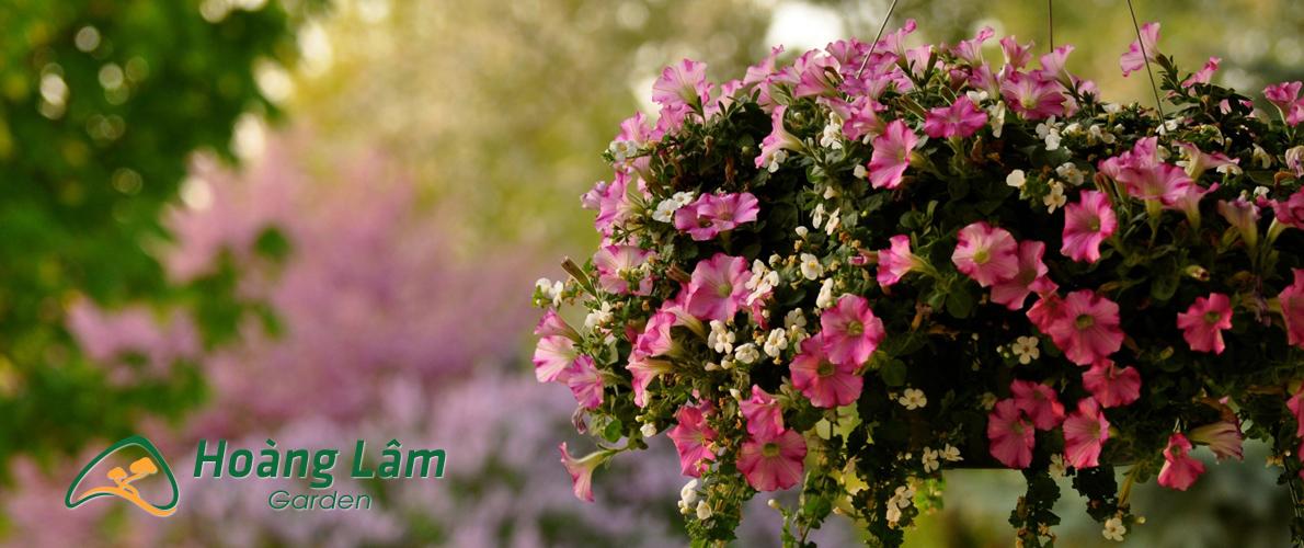 hat giong hoa hoanglam garden - Công ty hạt giống hoa, cửa hàng hạt giống hoa đẹp chất lượng cao