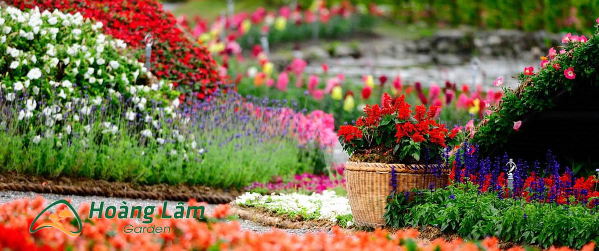 hat giong hoa hoanglam garden5 - Công ty hạt giống hoa, cửa hàng hạt giống hoa đẹp chất lượng cao
